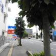 水戸の街路樹(4)