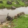 ワンコと宮ヶ瀬湖
