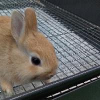 ウサギ入荷🐰