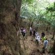 石垣島の巨樹・巨木巡り 2日目の4