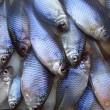 冬の装いになって来た北浦水系でタナゴ釣査!!(11月の月一タナゴチェック!!