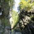 世界の鍾乳洞 クロアチア ゴジュウガラ 目白の?大群