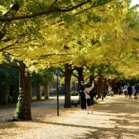 昭和記念公園イチョウ並木・・6
