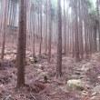 2 鷹ノ巣山(922m:東広島市・高田郡向原町)登山  植林地の中を