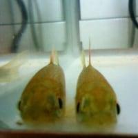 川魚博物館目指して