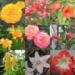 2001-05-26花の美術館