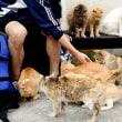 ネコが多い「青島」 全匹に不妊・去勢手術