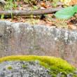 『翡翠』 苔の岩