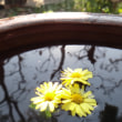 「琴が浜の四季」 干し柿の見える窓辺 (2)