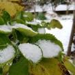 冬将軍きた〰٩(●ö●)۶