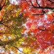 「皇居乾通り」と「八芳園」で紅葉狩り