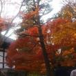 美しい紅葉♪