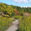 野幌森林公園・ふれあいコースへ