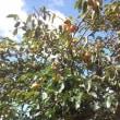 いい日、秋のお天気