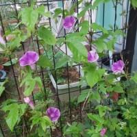 雨のない今日の庭