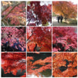 20011123泉自然公園 紅葉