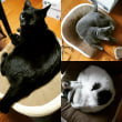 【小梅・さくら・桃之介通信】ヒトと猫の争奪戦!
