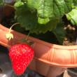 すずの家庭菜園
