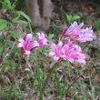 秋に向かう庭の花