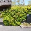 桂坂野鳥遊園や日吉ダムなど春を感じながらのドライブ・自宅近くには山菜が出始める