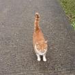猫の満足ポーズ