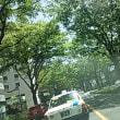 仙台市内青葉通り