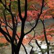 紅葉と黄葉を楽しむ!