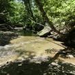 ヤマベ釣りは木漏れ日の川で…柳の下の泥鰌ならぬ山女魚