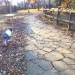 秋の公園と自分用メモ