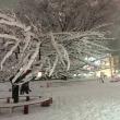 2018年1月22日  東京大雪