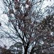 BT同好会ランチと徳川園庭園コンサート