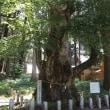 ぶらり旅・親都神社(群馬県吾妻郡中之条町)