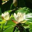 brazilian trio/ forests