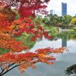 2017年・紅葉 庭園(広島県 名勝縮景園)