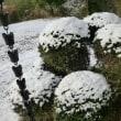 初積雪・・・