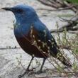 鳥の名前が分かりました
