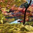 京都散策10・・・【いな】