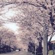 都城市都原さくら街道 4月9日日曜日朝  撮影