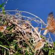 『花水の野鳥』 寒雀
