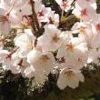 お墓参り~お花見~