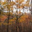 三才山と鹿教湯温泉の秋