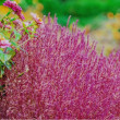 20/Oct  朝のコキアとトンビと昼の花とカワラヒワ