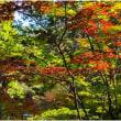 木漏れ日が紅葉を照らす、(南禅寺にて)