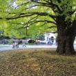 東京大学の構内散歩