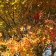 呑山観音の紅葉