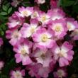 花の香りと仏の教え( 副題 生活と祈り )