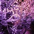4月-新潟旅行に行きました