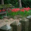 9月24日 二度目の多可町の神社にて ヒガンバナ①
