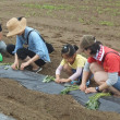 100人近くで田んぼと畑の耕育教室