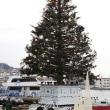 **.+*.*.*★ いよいよクリスマス ☆*.*.*+.**